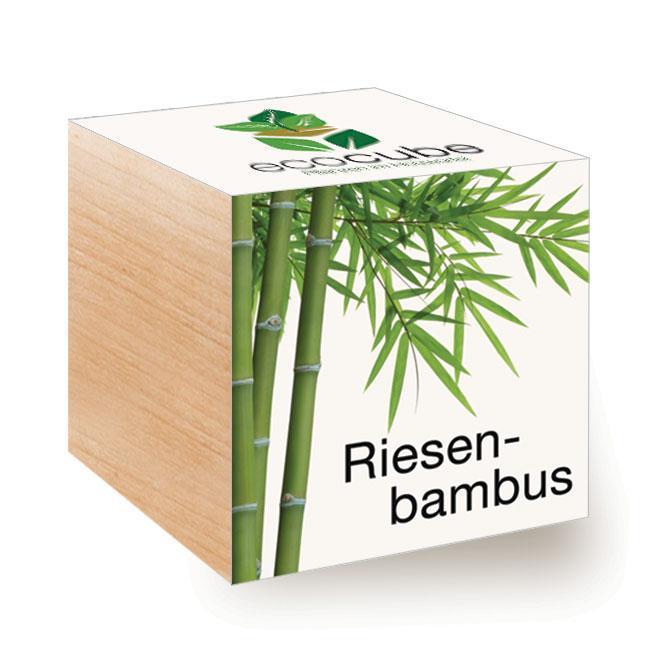 Ecocube Riesenbambus - Pflanzen im Holzwürfel