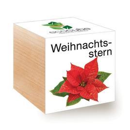 Ecocube Weihnachtsstern - Pflanzen im Holzwürfel