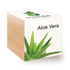 Ecocube Aloe Vera - Pflanzen im Holzwürfel
